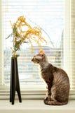 Gato que mira en el florero Foto de archivo