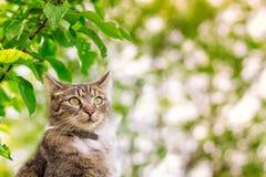 Gato que mira en la distancia Foto de archivo