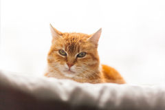 Gato que mira en la ventana Foto de archivo libre de regalías