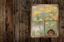 Gato que mira en ventana fotografía de archivo