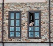 Gato que mira a escondidas de una ventana Fotos de archivo libres de regalías