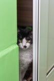 Gato que mira a escondidas a través de la puerta Imagen de archivo
