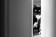 Gato que mira a escondidas a través de la puerta Imagen de archivo libre de regalías