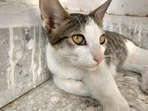 Gato que mira fijamente hacia la puerta foto de archivo libre de regalías