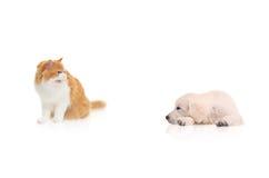 Gato que mira fijamente un perro Foto de archivo