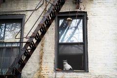 Gato que mira fuera de ventana fotos de archivo