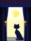 Gato que mira fuera de ventana Imagenes de archivo