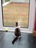 Gato que mira hacia fuera la ventana sobre un jardín lluvioso Fotos de archivo