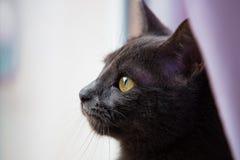 Gato que mira hacia fuera una ventana Imagen de archivo