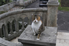 Gato que mira la cámara Imagenes de archivo