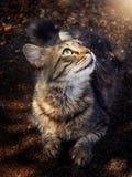 Gato que mira la luz mágica Fotografía de archivo