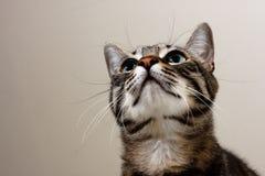 Gato que mira para arriba Imágenes de archivo libres de regalías