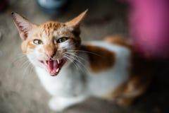 Gato que mira para arriba Imagenes de archivo