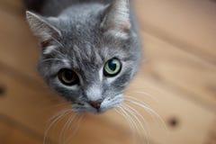 Gato que mira para arriba la cámara Fotos de archivo