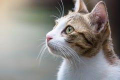 Gato que mira sobre el top Fotografía de archivo libre de regalías