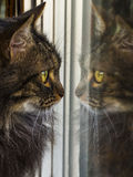 Gato que mira su propia reflexión en la ventana Fotografía de archivo libre de regalías