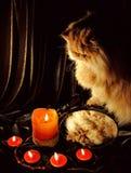 Gato que mira su reflexión en el espejo y la adivinación de la práctica Foto de archivo libre de regalías