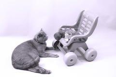 Gato que mira a sus bebés Imagen de archivo