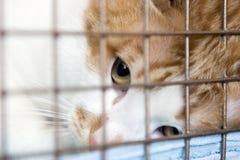 Gato que mira a través de las barras Imagen de archivo