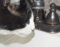 Gato que obtém uma bebida do torneira mas a aterrissagem em seu nariz fotos de stock