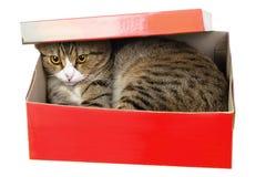 Gato que oculta en caja roja foto de archivo libre de regalías