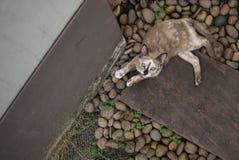 Gato que olha à câmera Imagem de Stock Royalty Free