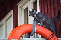 Gato que olha à vista Imagem de Stock Royalty Free