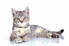 Gato que olha acima Imagens de Stock Royalty Free