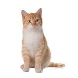 Gato que olha acima Imagens de Stock