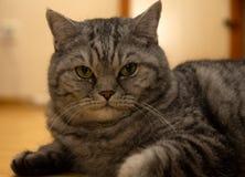 Gato que olha algo in camera imagens de stock royalty free