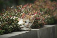 Gato que olha atrás da planta Fotos de Stock Royalty Free