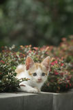 Gato que olha atrás da planta Imagem de Stock Royalty Free