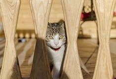 Gato que olha a câmera fotografia de stock