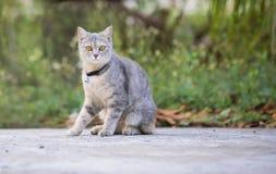 Gato que olha a câmera Imagem de Stock Royalty Free