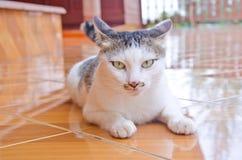 Gato que olha a câmera Fotos de Stock