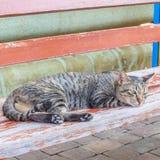 Gato que olha e dozy Imagens de Stock Royalty Free