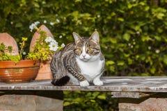 Gato que olha e que caça Fotografia de Stock