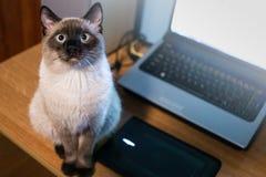 Gato que olha em linha reta em mim Fotografia de Stock