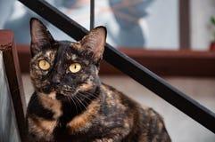 Gato que olha fixamente das escadas Imagens de Stock