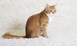 Gato que olha lateralmente fotos de stock