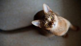 Gato que olha o imagem de stock