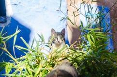 Gato que olha o fotografia de stock