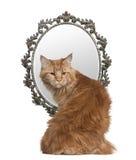 Gato que olha para trás com um espelho no fundo Imagem de Stock Royalty Free