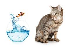 Gato que olha saltar dos peixes de um aquário fotografia de stock