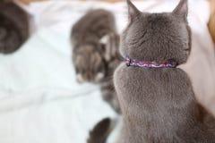 Gato que olha seus bebês Fotos de Stock