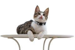 Gato que parece para arriba aislado en el fondo blanco Foto de archivo libre de regalías