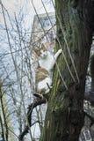 Gato que pendura do tronco de árvore imagem de stock