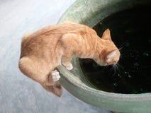 Gato que pendura na bacia para beber a água Imagens de Stock