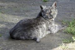 Gato que pone en el groud Imágenes de archivo libres de regalías