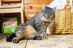 Gato que pone en el piso Foto de archivo